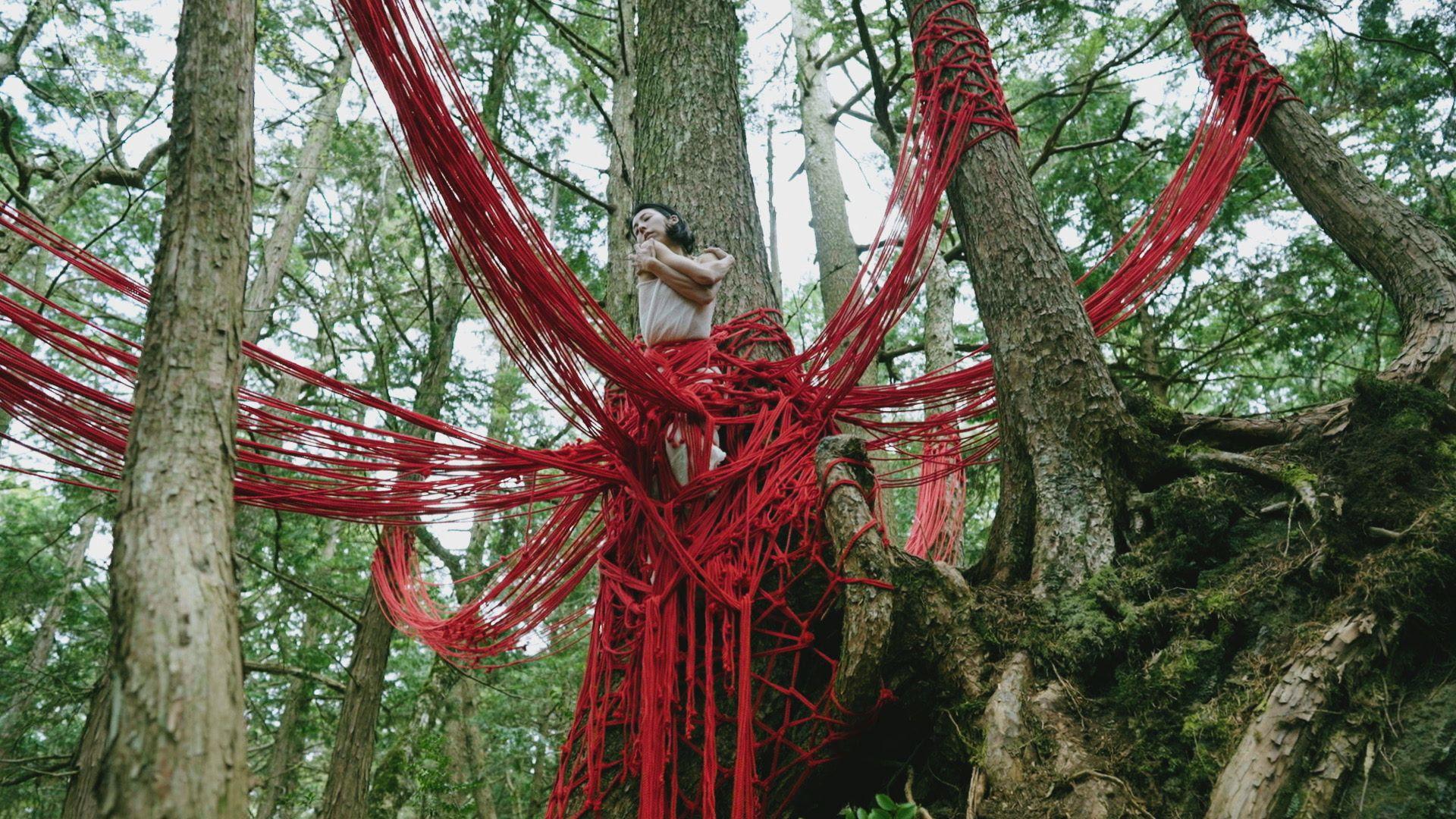 樹海Rope art work 『Reborn』